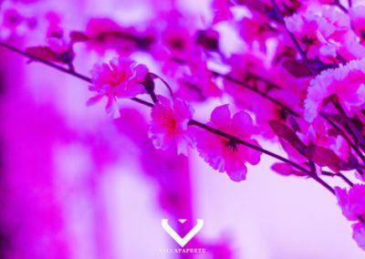 Pink Blossom @ Villapapeete012