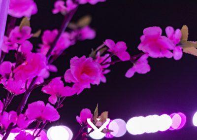 Pink Blossom @ Villapapeete016